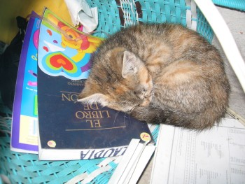Photo of a Spanish Book of Mormon and a sleeping kitty
