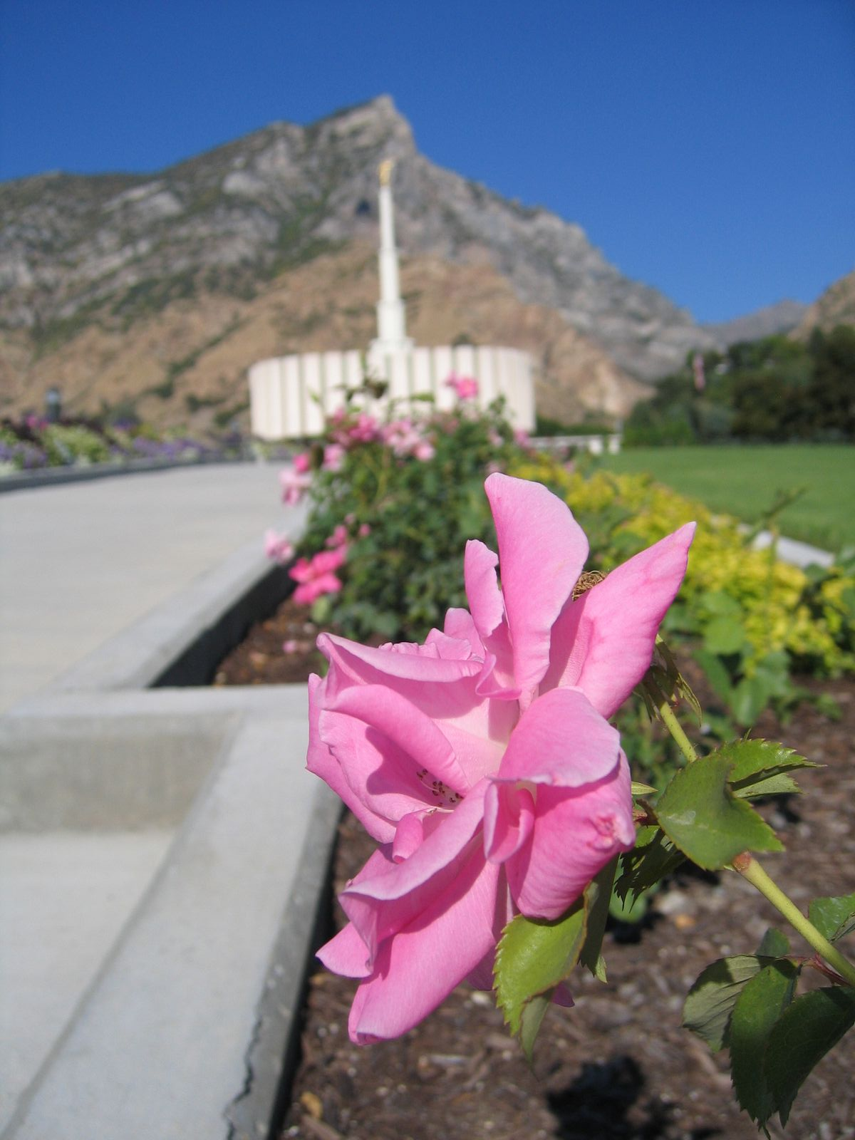 Flower at the Provo Temple