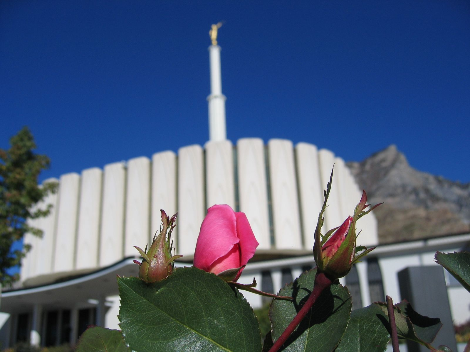 Buds at the Provo Temple