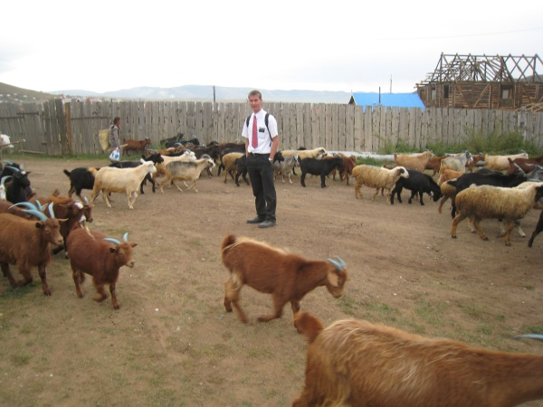 Daniel with the goats.