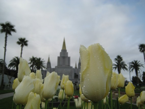 Oakland Temple flower