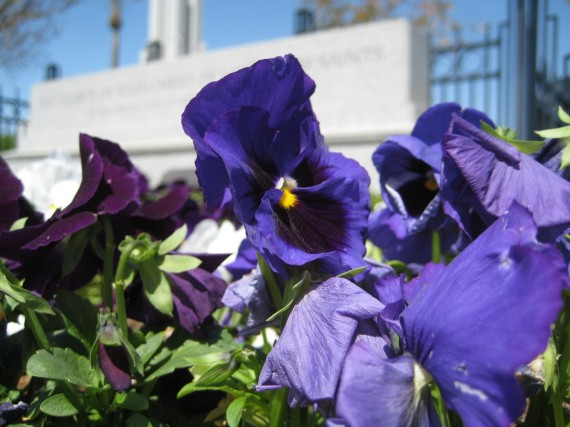 Redlands Temple flower