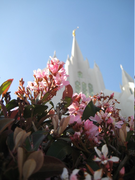 San Diego Temple flower