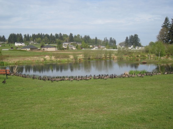 Vancouver pond