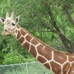 Bryson Visits Hogle Zoo