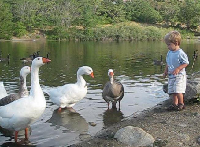 Bryson feeding fowl