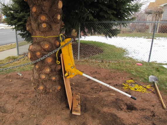 Floor jack up a tree