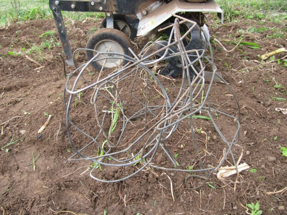 Tomato cage caught in the tiller