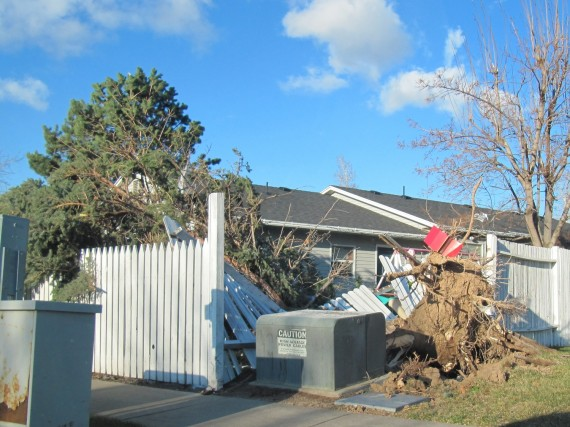 Kaysville windstorm downed fence by tree