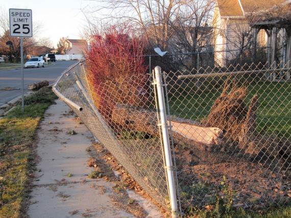 Kaysville windstorm downed fence by tree cleanup