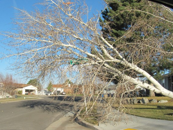 Kaysville windstorm downed tree