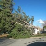Kaysville Windstorm Damage