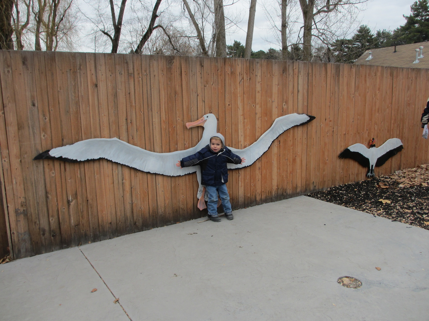 Wingspan comparison